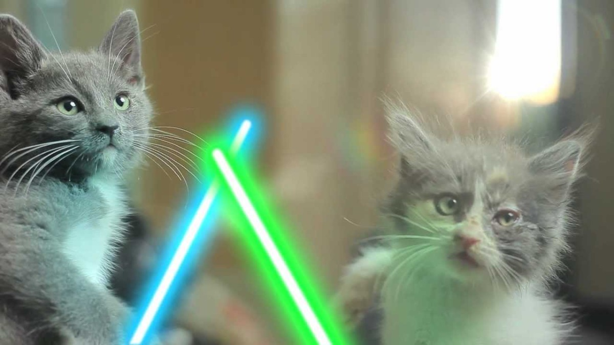 Mews: May the force be withyou
