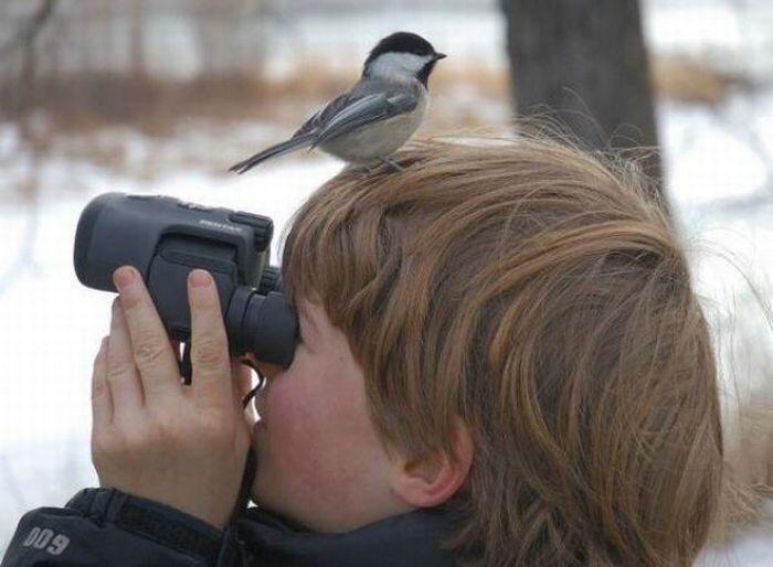 Birdsong Expert