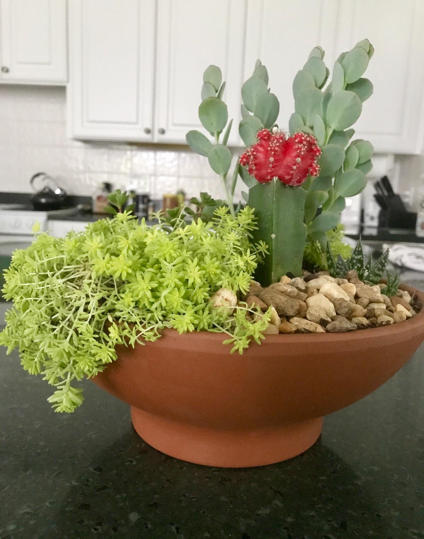 Succulent Succulents