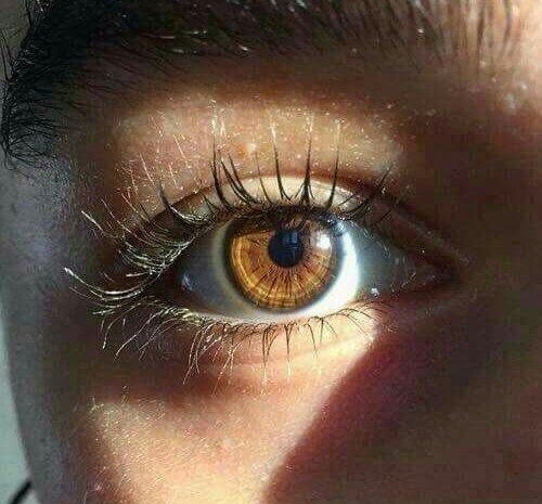 Brown Eyes Praying For Eyebrowz